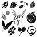 07_frucht-kraeuter-hana
