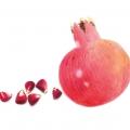 18_granatapfel_2